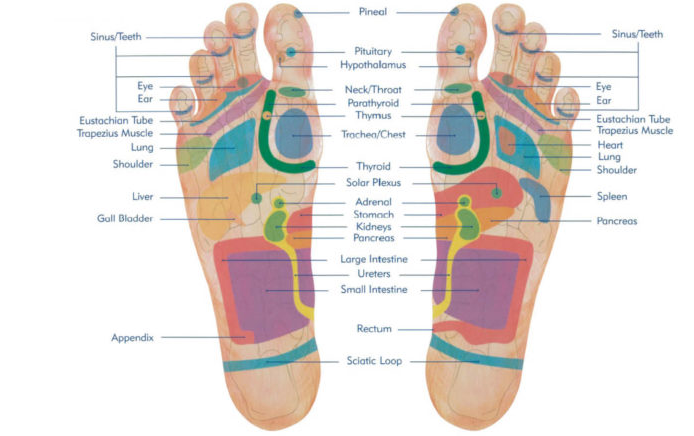 reflexology foot map - natural therapies by katie - holistic therapies - stansted